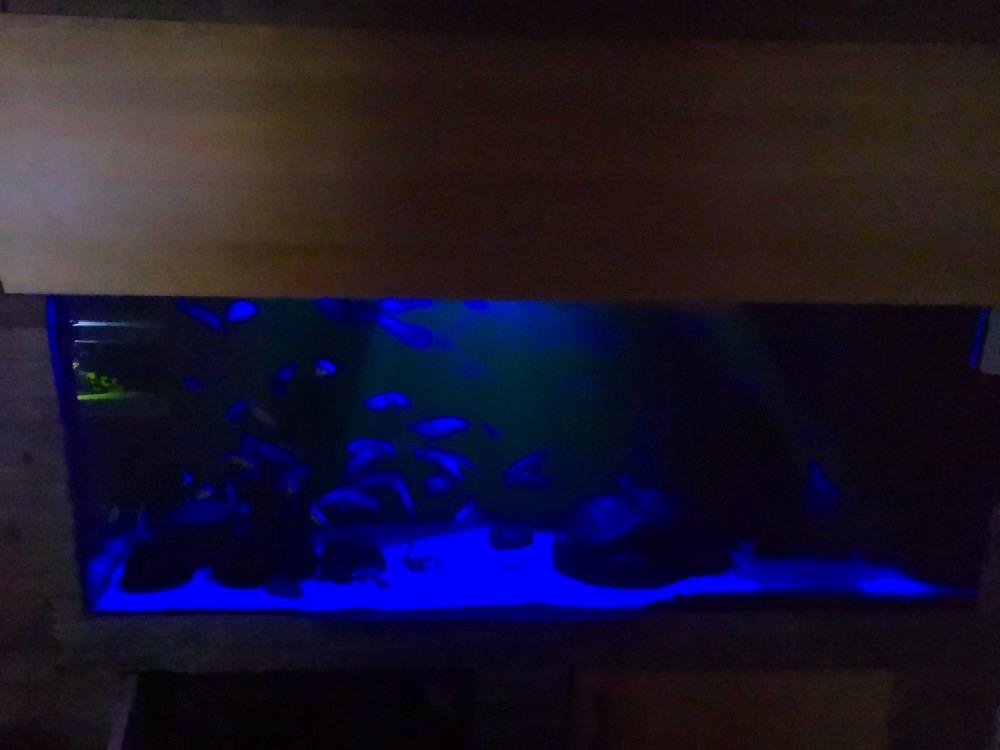 LED osvětlení Akvárium Horusice 3